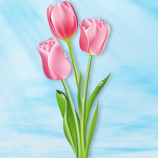 Tulip, Nature, Flower, Flowers, Sky, Flash, Tulip Pink