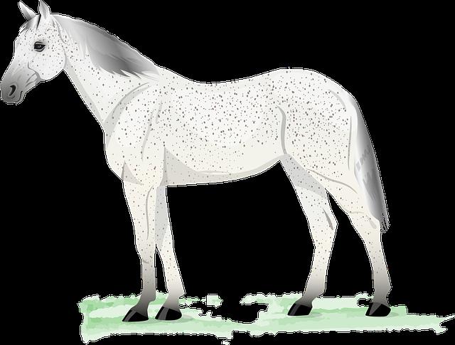 Horse, Gray, Grey, Fleabitten, Flea Bitten