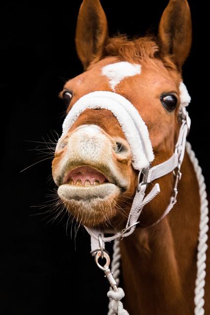 Horse, Portrait, Flehmen, Foot