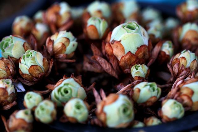 A Fleshy Plant, Fleshy In This, Cactus, Garden, Flowers