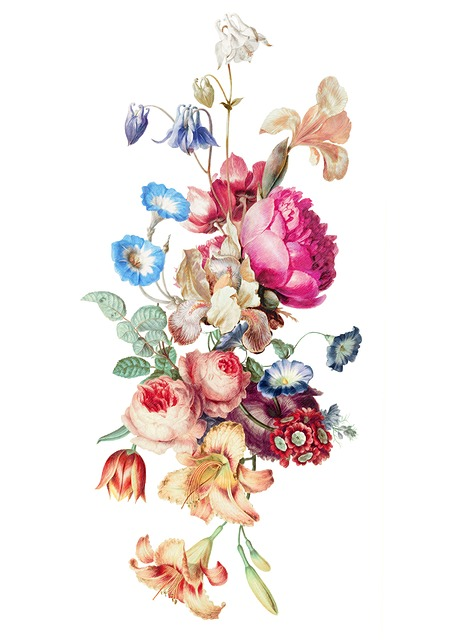 Fleur, Vintage, Floral, Painting, Stocks, Botanical