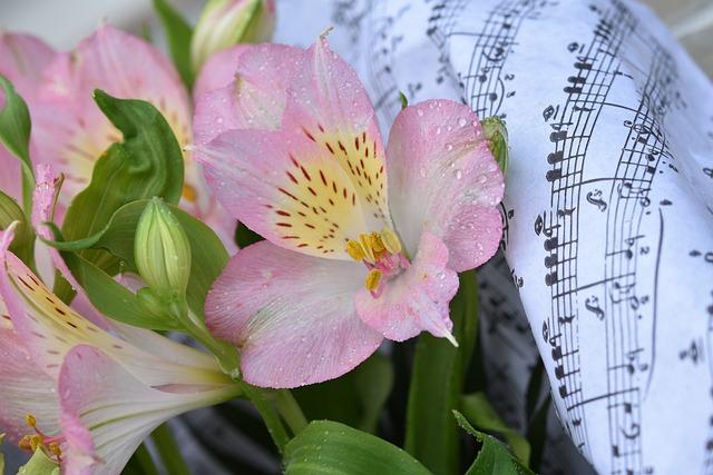 Flower, Fleur De Lis, Button-de-lys, Botany, Rain Water