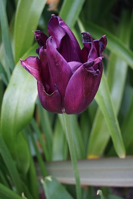 Fleur, Flore, La Nature