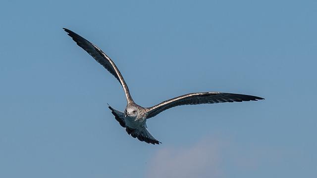 Bird, Flight, Animal World, Nature, Gulls