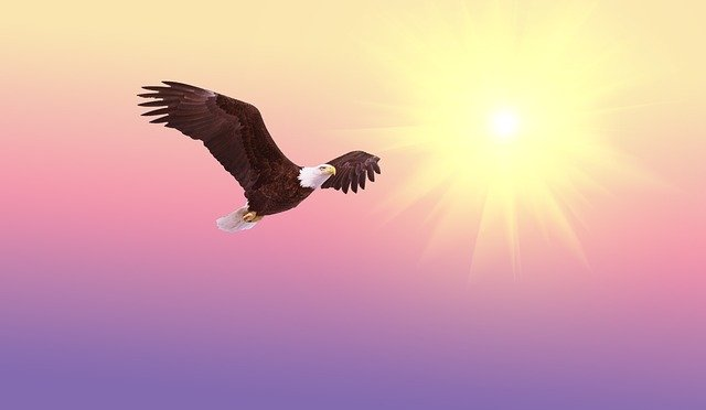 Bald Eagle, Soaring, Bird, Raptor, Flight, Nature, Bald