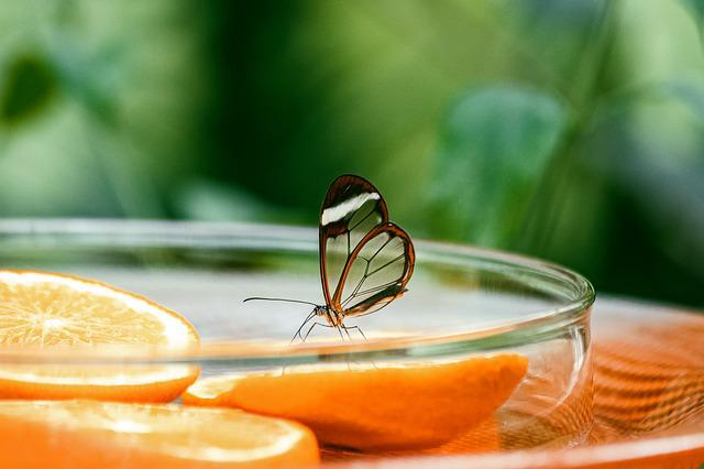 Butterfly, Insect, Exotic, Flight Insect, Nature