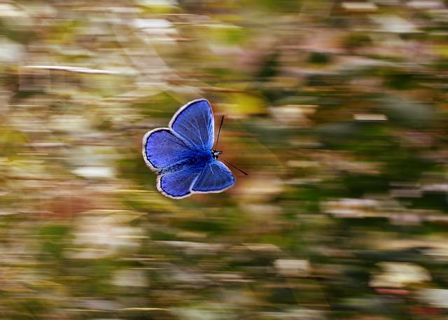 Butterfly, Panning, Blue, Wings, Flight, Insecta