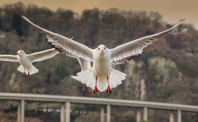 Bird, Wing, Flight, Nature, Animal World