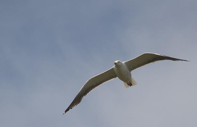 Bird, Sky, Nature, Flight, Outdoors