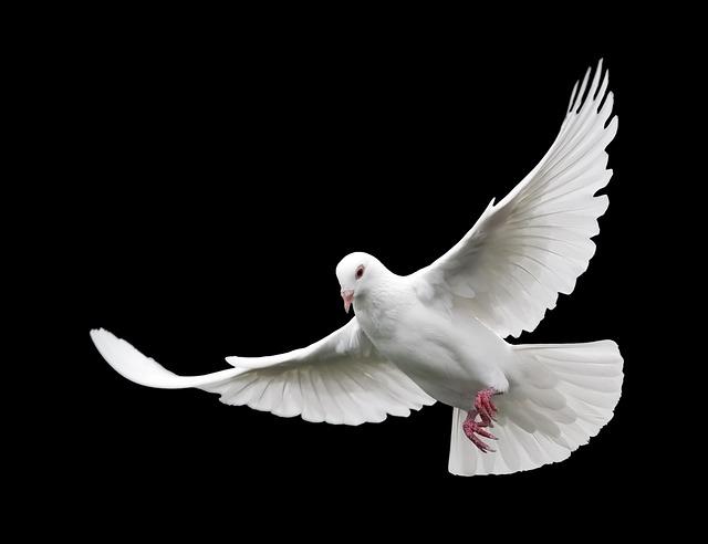 Bird, Nature, Feather, Wildlife, Flight, Pigeon, Fly
