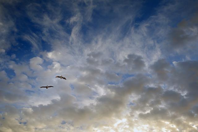 Birds, Flight, Pair, Sky, Partner
