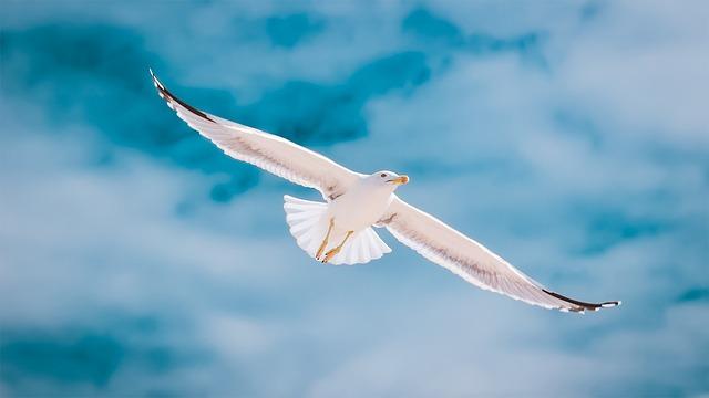 Seagull, Portugal, Algarve, Flight, Sky, Freedom, Bird