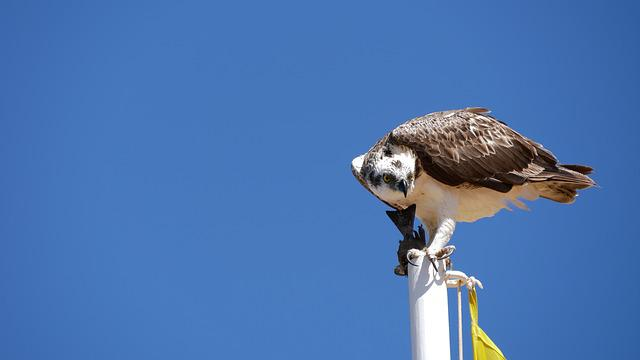 Bird, Nature, Animal World, Animal, Sky, Wing, Flight