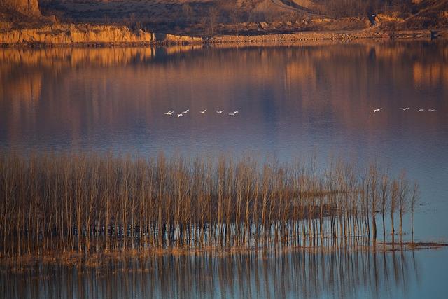 Swan, Twilight, Yellow River, Swans, Group, Flight