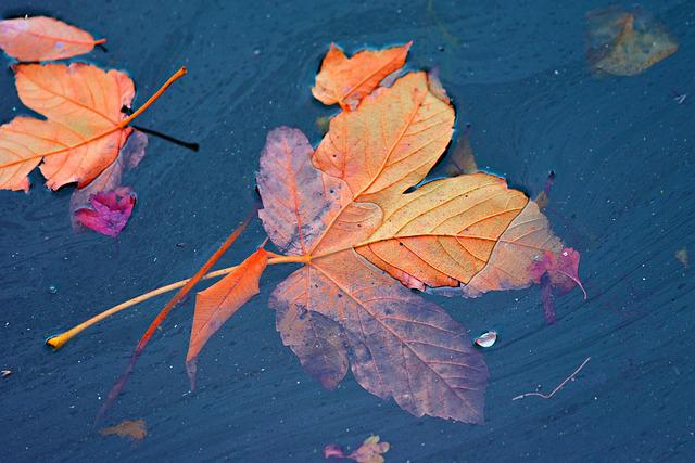 Autumn Leaf, Vein, Water, Floating, Leaves, Fallen