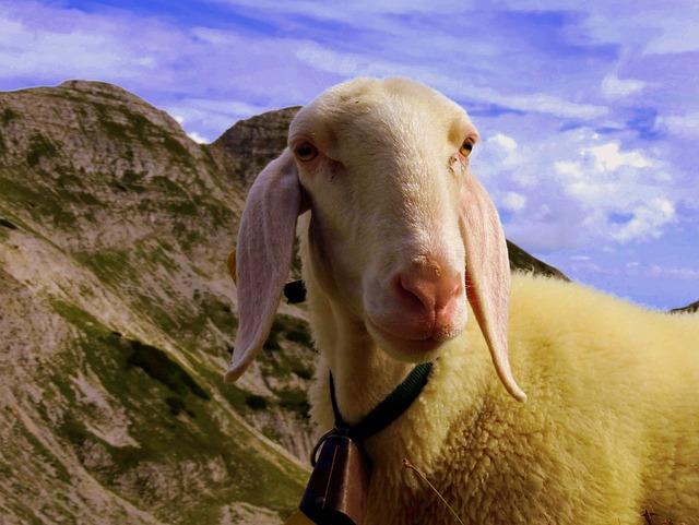 Flock, Grass, Sky, Clouds, Animal, Sheep, Landscape