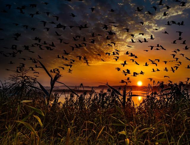 Sunset, Flock Of Birds, Migratory Birds, Swarm, Birds