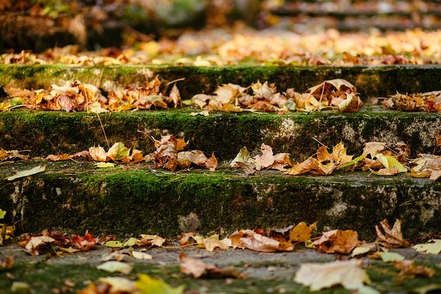 City, Architecture, Nature, Autumn, Down, Fall, Flora