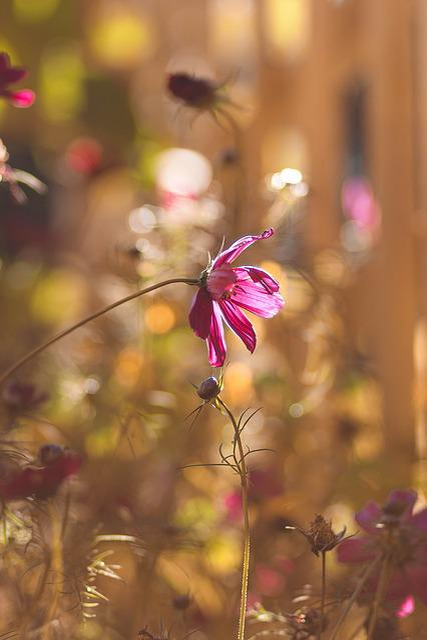 Bloom, Blossom, Flora, Flower Buds, Flowers, Macro