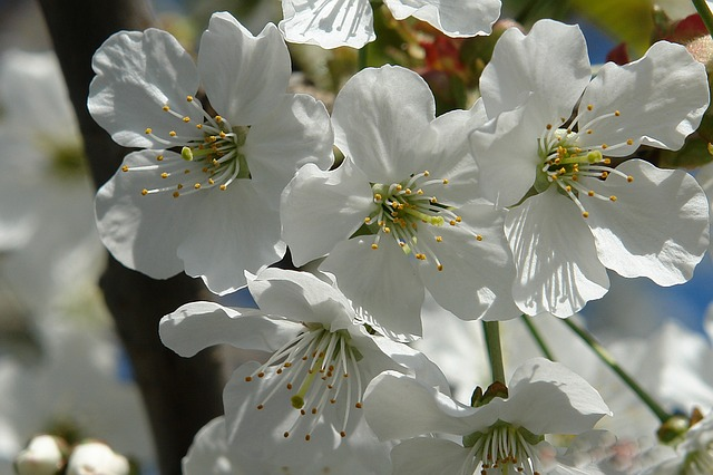 Flower, Nature, Plant, White, Blossom, Petals, Flora