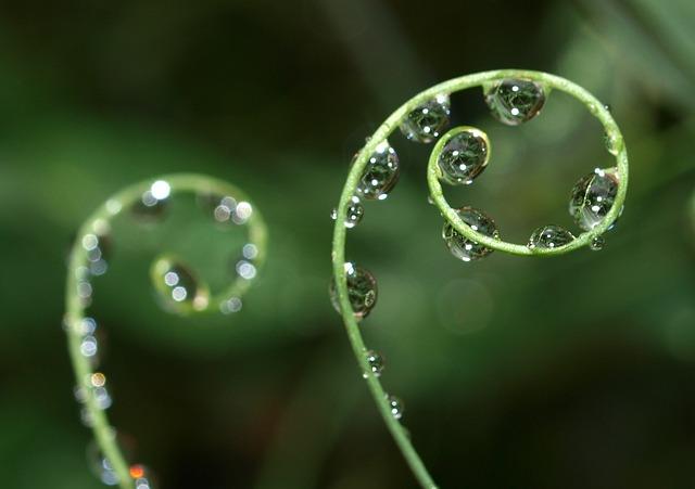 Dew, Rain, Nature, Drop, Flora, Droplet, Wet, Closeup