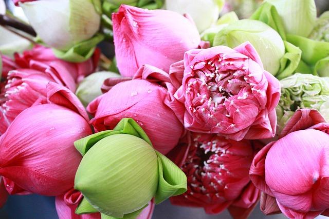 Flower, Leaf, Nature, Floral, Flora, Closeup, Lotus