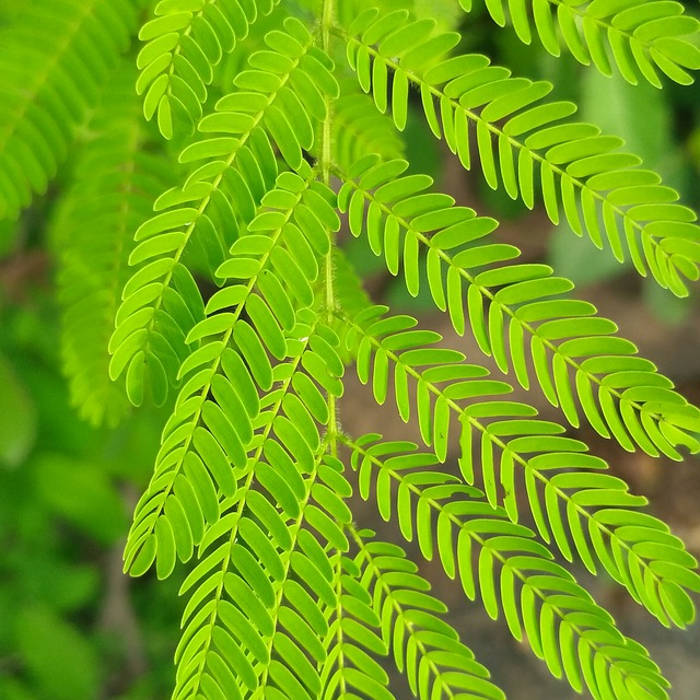 Leaf, Fern, Nature, Flora, Growth