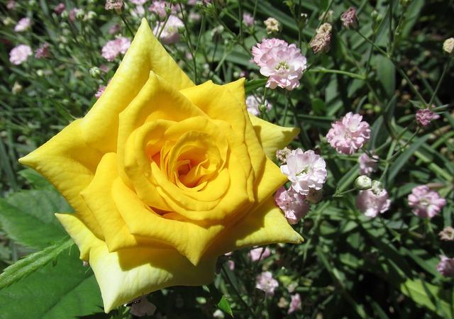 Flower, Flora, Nature, Petal, Garden