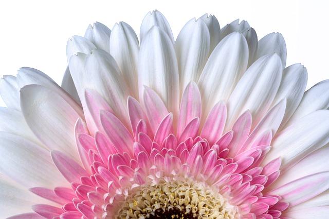 Flower, Flora, Nature, Petal, Floral, Blooming