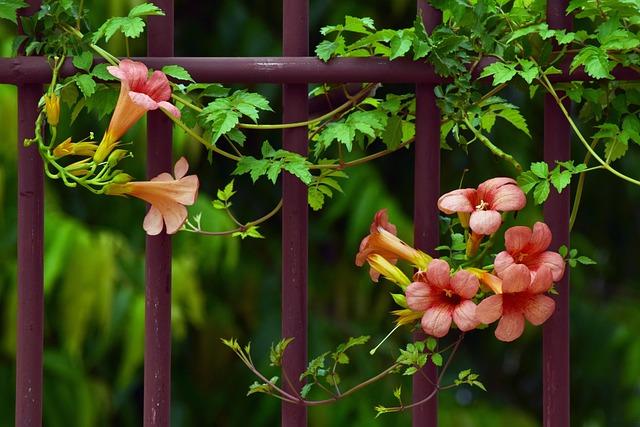 Flower, Nature, Leaf, Flora, Outdoors, Trumpet