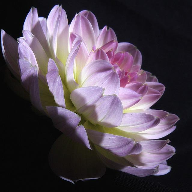 Flower, Flora, Nature, Petal