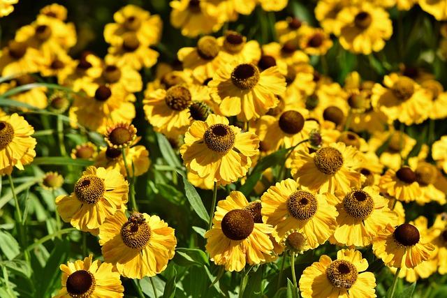 Flowers, Coneflowers, Garden, Plant, Flora, Bloom