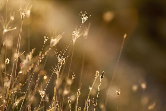 Grass, Grasses, Plant, Nature, Flora, Garden, Bloom