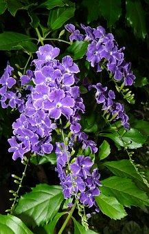 Nature, Flower, Garden, Flora, Leaf