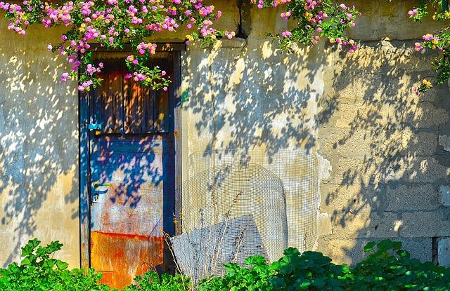 Flower, Flora, Garden, Nature, Tree, House, Leaf, Old