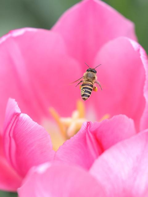 Nature, Flower, Insect, Flora, Pollen, Pink Nature