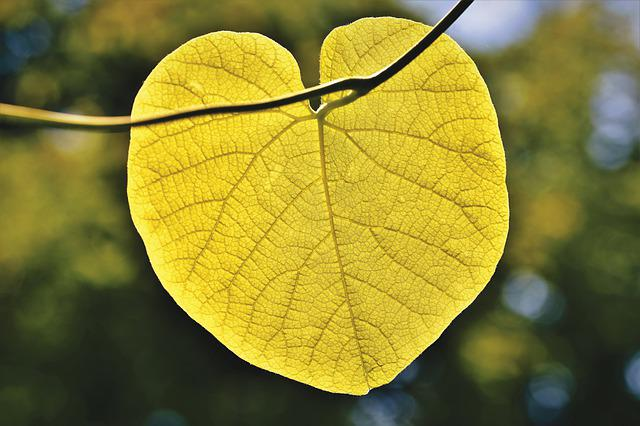 Leaf, Fibers, Leaf Ribs, Flora, Botany, Heart Shaped