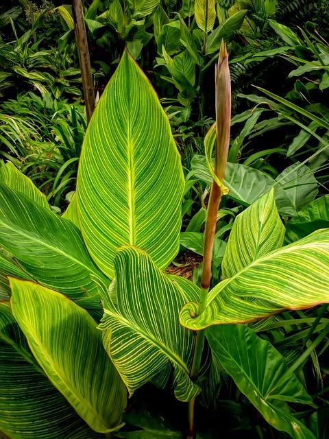 Leaf, Flora, Nature, Growth, Garden