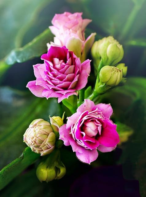 Flower, Nature, Flora, Floral, Leaf, Macro, Pink