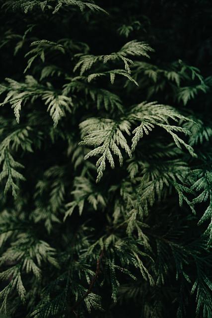 Plants, Moody, Nature, Green, Summer, Flora, Spring