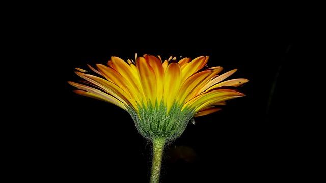 Flower, Nature, Flora, Bright, Color, Growth, Garden