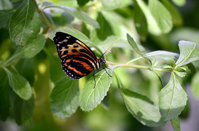 Nature, Butterfly, Insect, Leaf, Flora