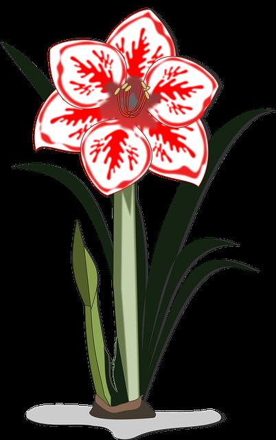 Amaryllis, Clip Art, Flor, Flora, Flower, Nature, Plant