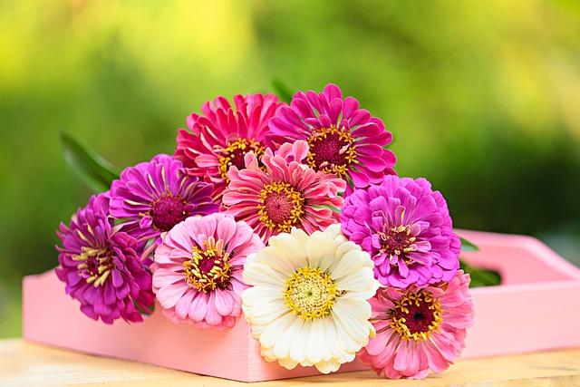 Flower, Gerbera, Daisy, Nature, Flora, Garden, Floral