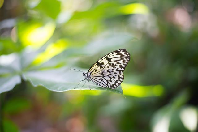 Nature, Butterfly, Insect, Outdoors, Flora