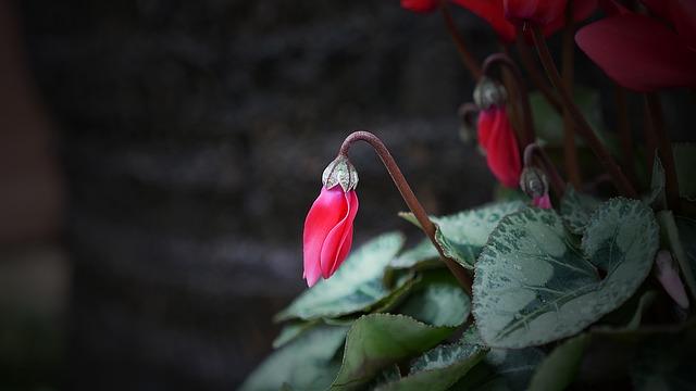 Nature, Flower, Outdoors, Flora, Leaf, Garden