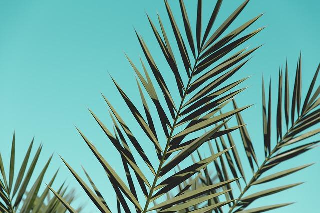Nature, Flora, Tree, Leaf, Cactus