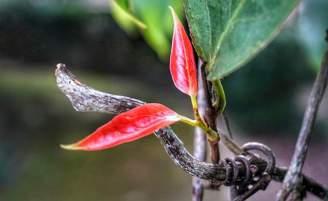 Colour, Bright, Red, Leaf, Growth, Nature, Flora
