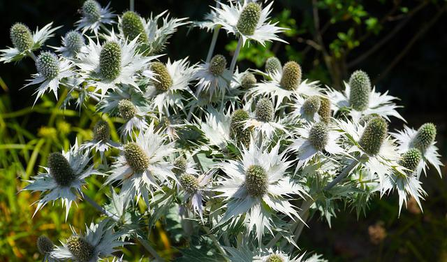 Thistle, Wild Flower, Nature, Flora, Prickly