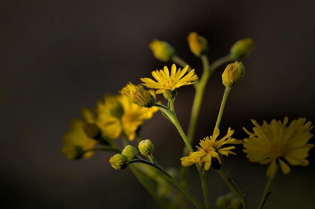 Flower, Nature, Flora, Leaf, Growth, Love, Light, Plant